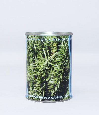 Microgiardini Fiori in Lattina Seme Rosmarino