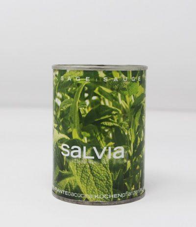 Microgiardini Fiori in Lattina Seme Salvia