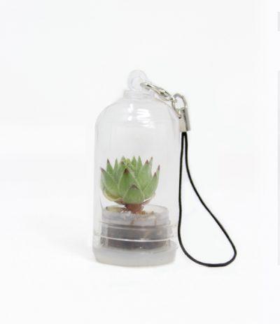 Portachiavi Mini Cactus con Micro Nature Floor