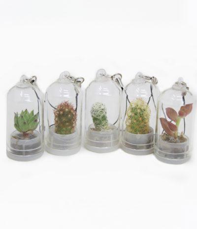 Portachiavi Mini Cactus con Specie Disponibili