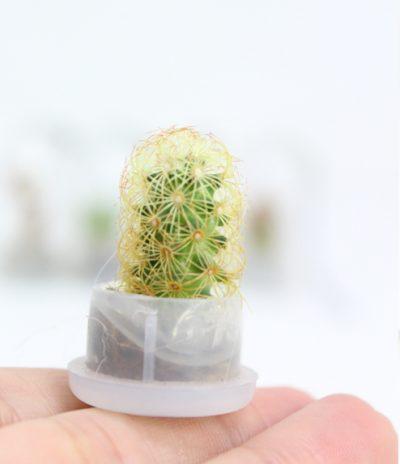 Portachiavi Mini Cactus con Micro Nature Hedge senza Capsula