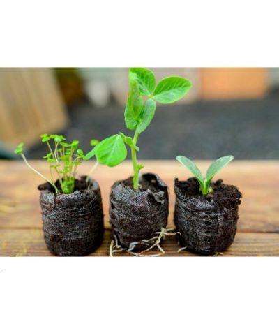 Green Espresso Vasetto Compostabile in Lolla di riso con Germogli di Semi diversi