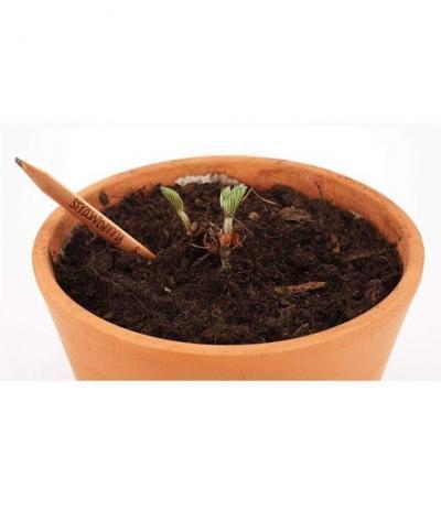 Matita Sprout | Matita Piantabile | Matite con Semi