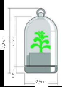 mini_cactus_size
