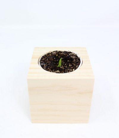 Cubo in legno iGreen Cube 7.5x7.5 cm per far crescere un fiore o pianta in versione standard con germoglio