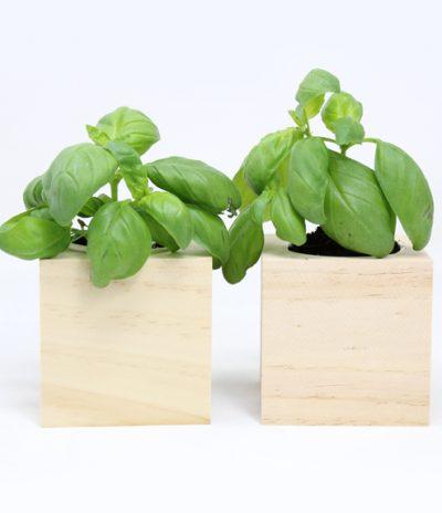 Cubo in legno iGreen Cube 7.5x7.5 cm Basilico vista frontale