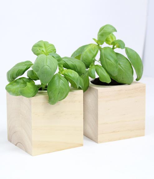 Cubo in legno iGreen Cube 7.5x7.5 cm Basilico vista laterale