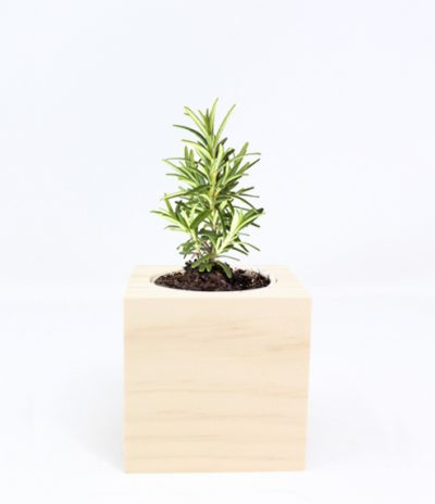 Cubo in legno iGreen Cube 7.5x7.5 cm Rosmarino