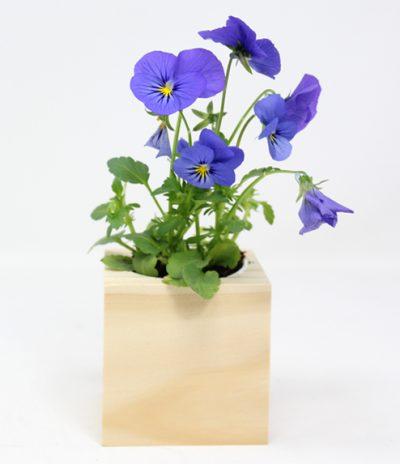 Cubo in legno iGreen Cube 7.5x7.5 cm Viola