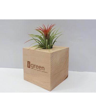 Airplant Piante Aeree in Cubi di Legno Personalizzazione per iGreen Gadgets