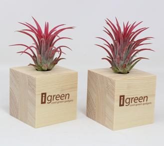 Airplant Piante Aeree in Cubi di Legno Versione con logo iGreen