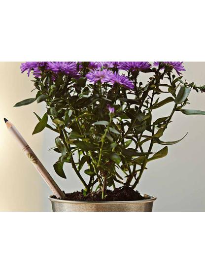 Matita Sprout Liner: la prima matita per il trucco che diventa una piantina!